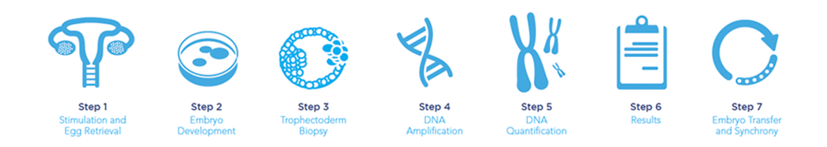 preimplantation genetic screening steps
